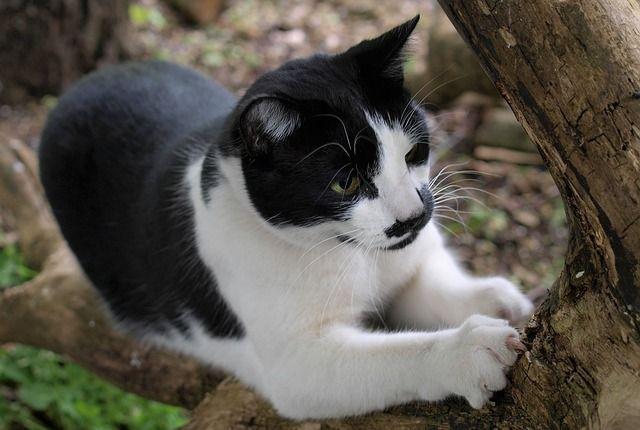Marcaje gatos