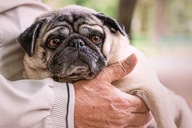 perros ancianos cuidados