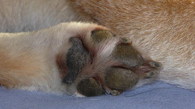 costarle las uñas perro