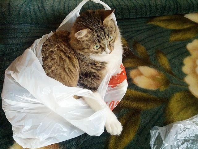 Cosas peligrosas gatos