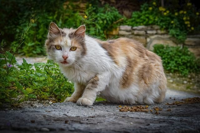 insufiencia renal gatos