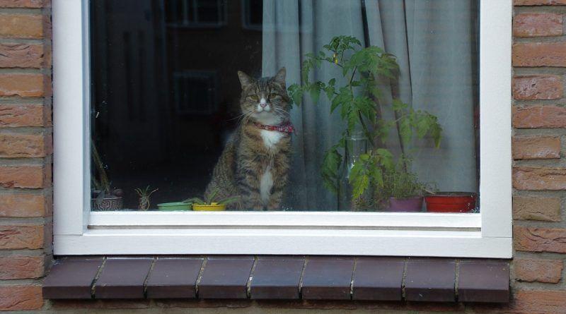 gato viaje