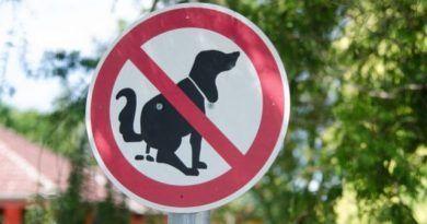 Limpio paseas mascota