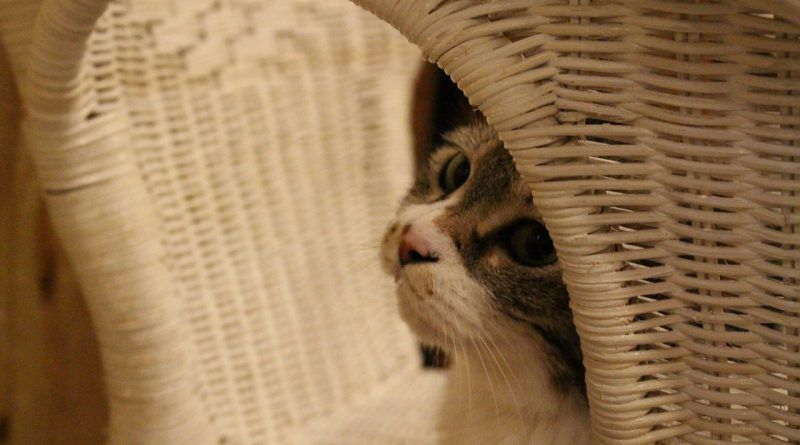 Meter gato transportín