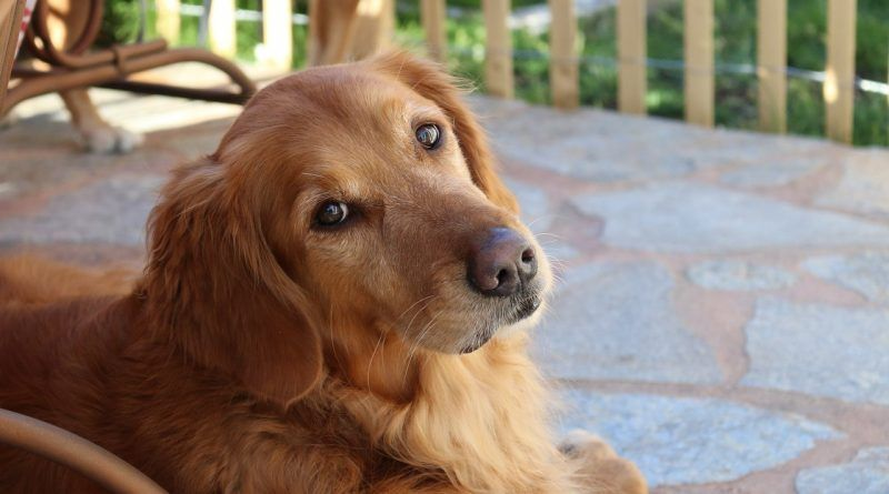 castrar-esterilizar-perro