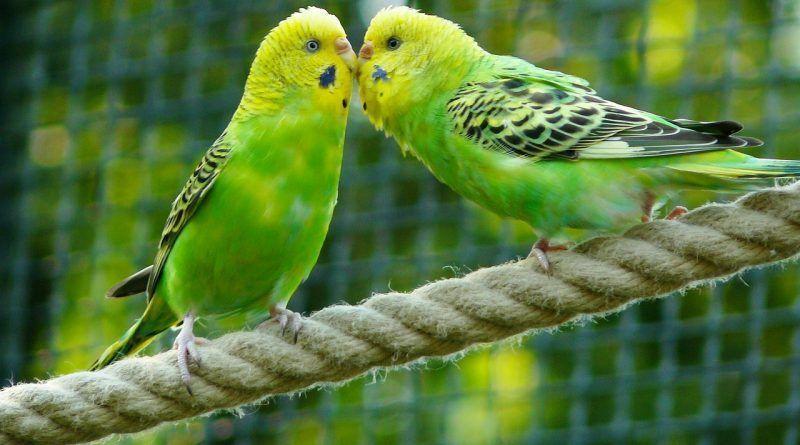 años viven pájaros