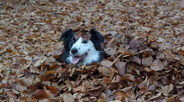otono-perro
