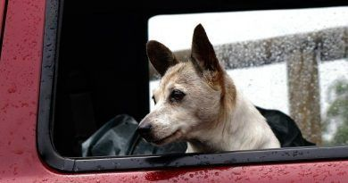 perro-pasear-bajo-la-lluvia