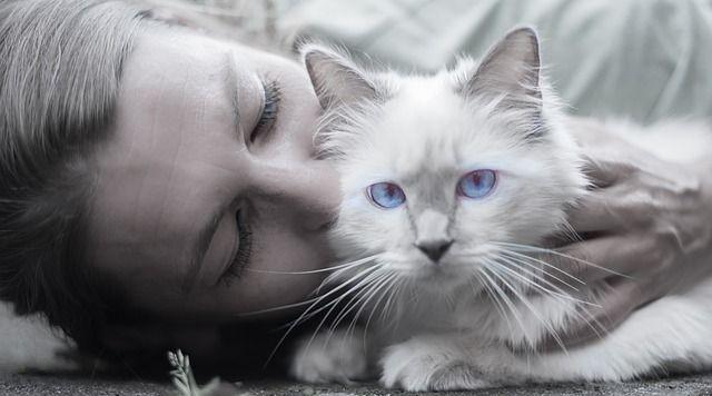 toxoplasmosis-gatos-y-embarazadas