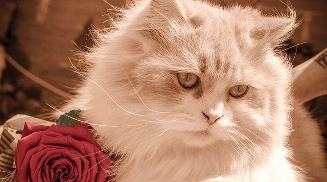alergico-y-convivir-con-gato