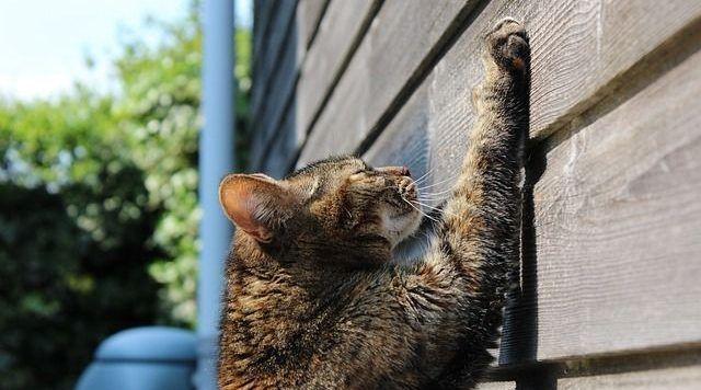 gato-no-arane-muebles