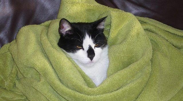proteger-gato-del-frio