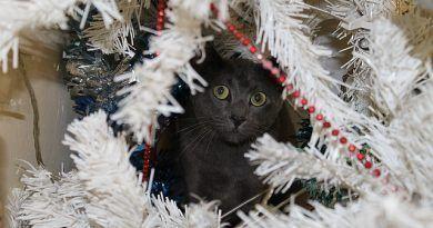 proteger-decoracion-navidena-gato
