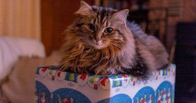 que-regalar-a-gato-en-navidad