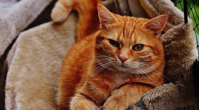 Cuidados gato anciano