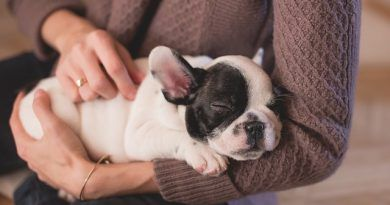 Cuidar cachorro