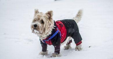 Nieve y perros