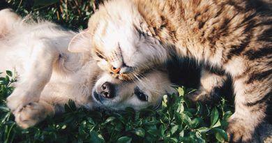 Gato acepte perro