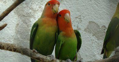 mueren aves pierden pareja