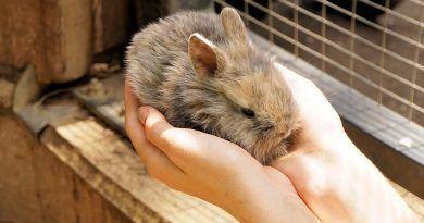 vacunas conejos