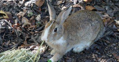 tipos heno conejo