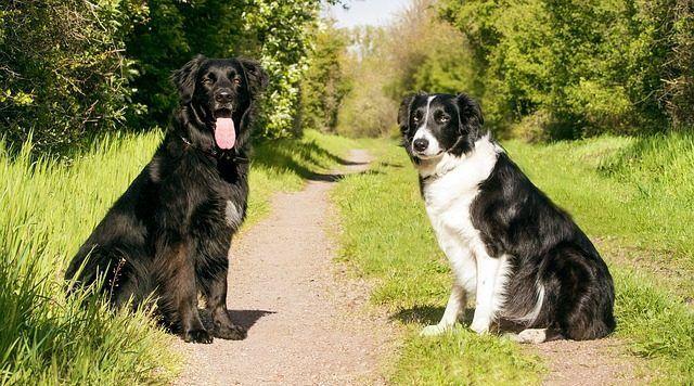 antiparasitarios externos perros