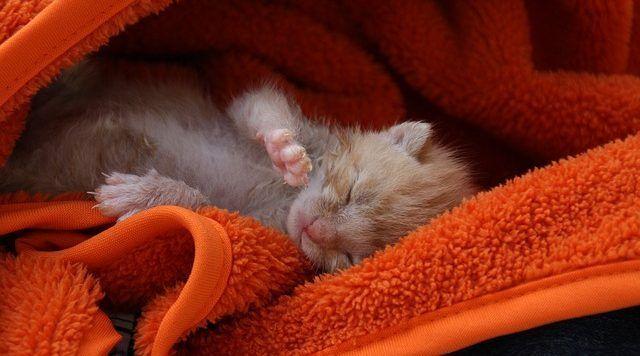 gatitos cuidados básicos