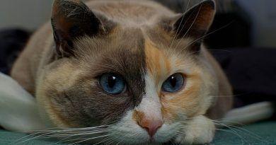 anticonceptivos gatas