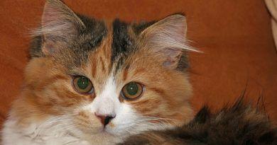 Esterilización gatas