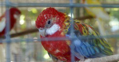 pájaros sufrir estrés