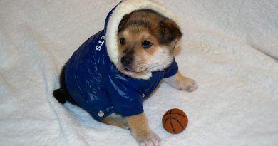 ropa perro