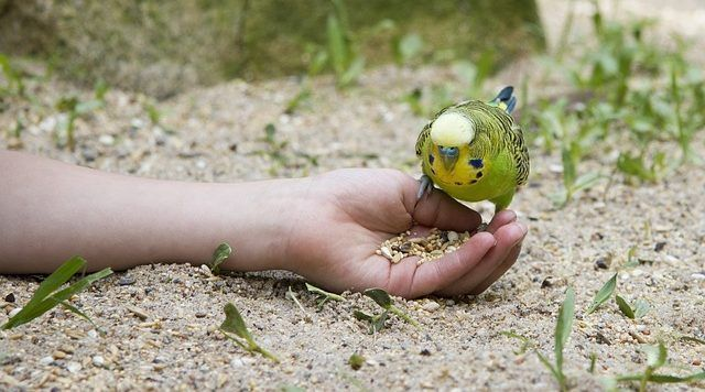Alimentación aves domésticas