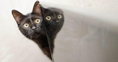 Estrés gato, síntomas y tratamiento