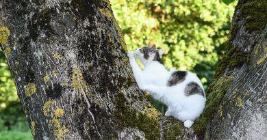 marcaje gatos evitar