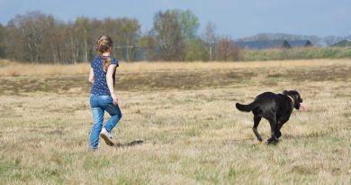 Hacer ejercicio perro
