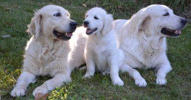 Parásitos intestinales perros