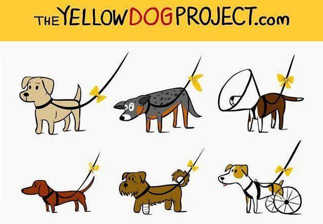 proyecto lazo amarillo
