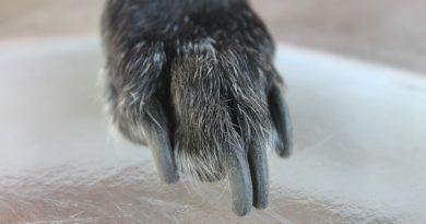 cortarle las uñas perro