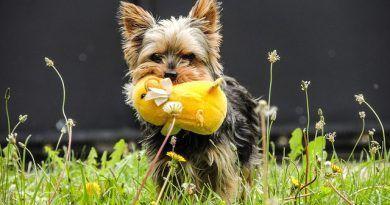 Perros de raza pequeña