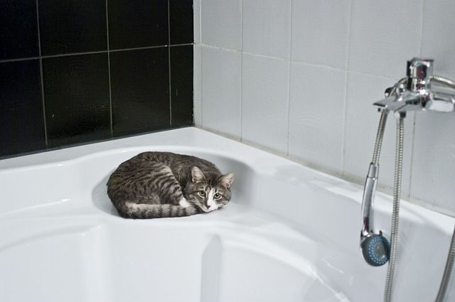 banar a los gatos