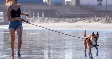 Normas en las playas donde admiten perros