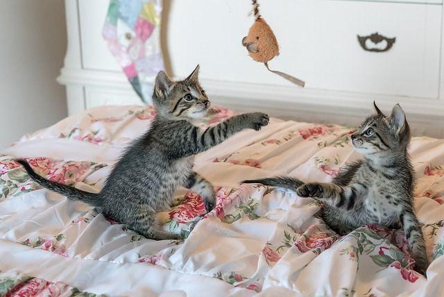 ejercicios para gatos