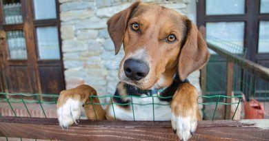 residencia para perros