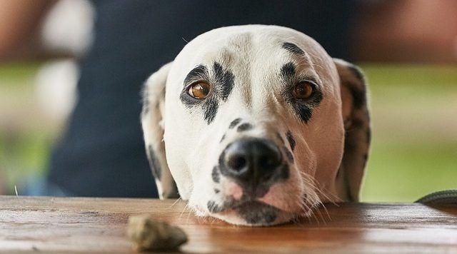 un perro coma basura