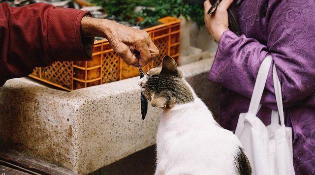 alimentos peligrosos para los gatos