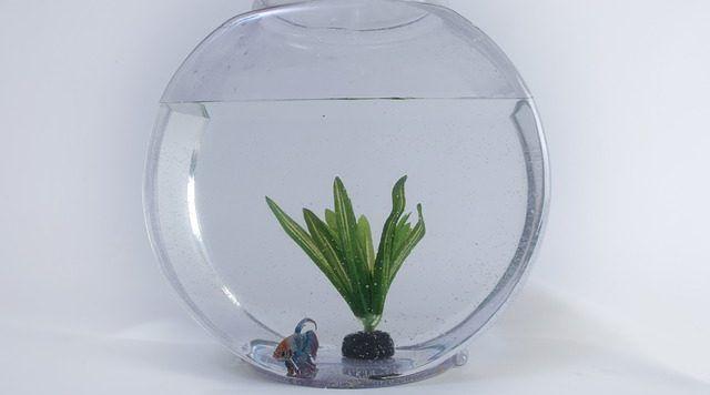 el ciclado del acuario