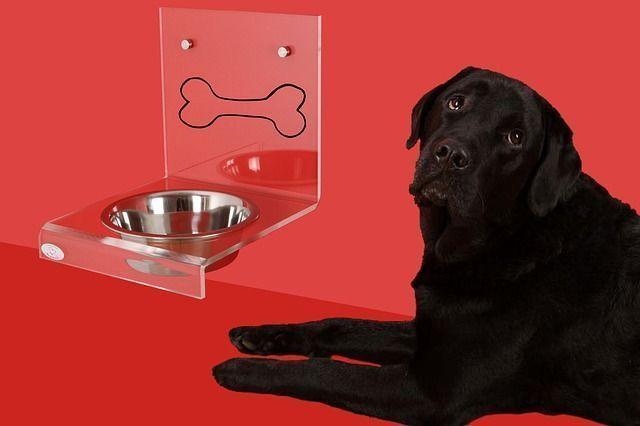 la alimentación de los perros