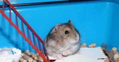 limpiar la jaula de los roedores