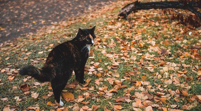 los gatos en otono