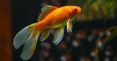 alimentacion de los peces